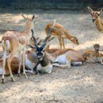 Citi housing Multan Zoo deer