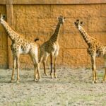 Citi housing Multan zoo